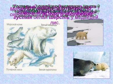 Животный мир Арктики. Подумайте и ответьте! Какие особенности животных помога...