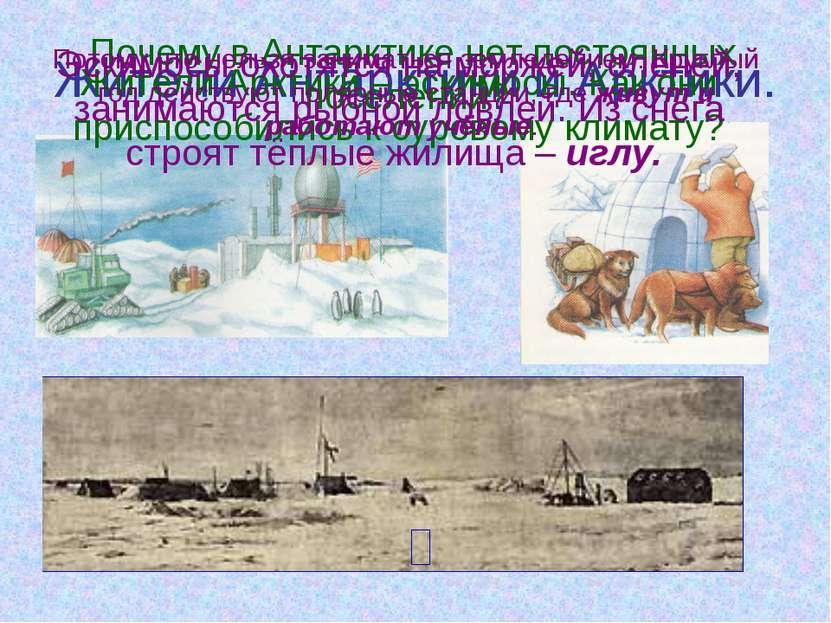 Жители Антарктики и Арктики. - Почему в Антарктике нет постоянных поселений? ...