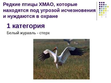 Редкие птицы ХМАО, которые находятся под угрозой исчезновения и нуждаются в о...