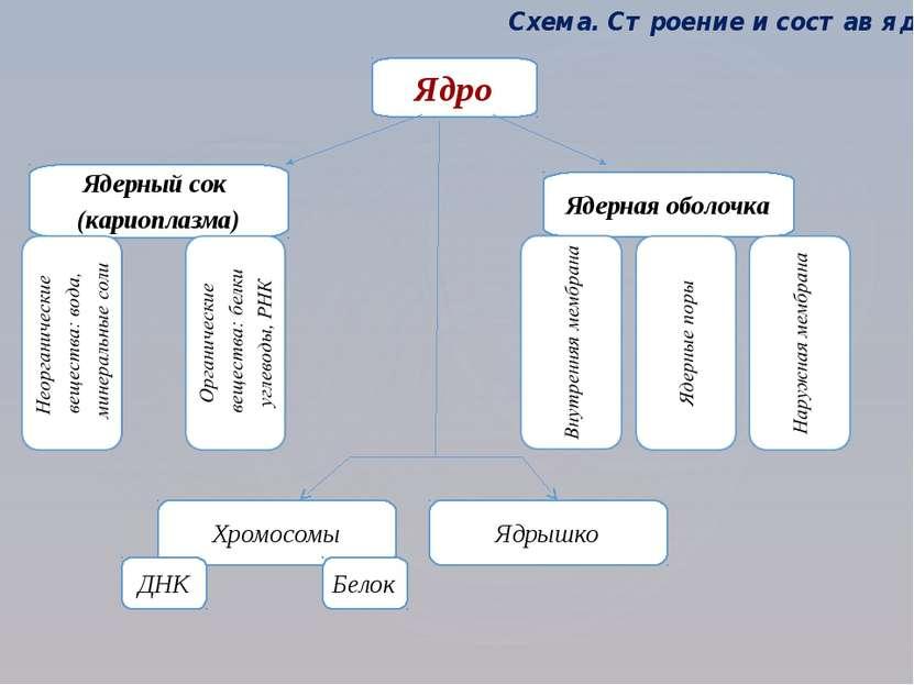Ядро Ядерный сок (кариоплазма) Ядерная оболочка Хромосомы Схема. Строение и с...