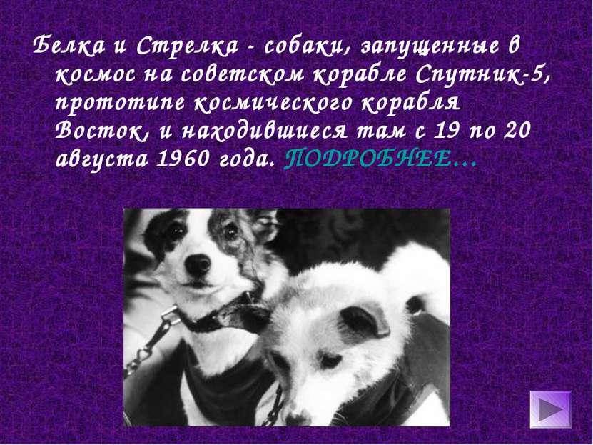 Белка и Стрелка - собаки, запущенные в космос на советском корабле Спутник-5,...