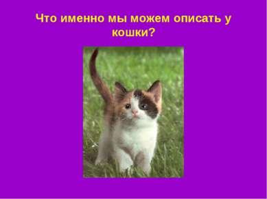 Что именно мы можем описать у кошки?