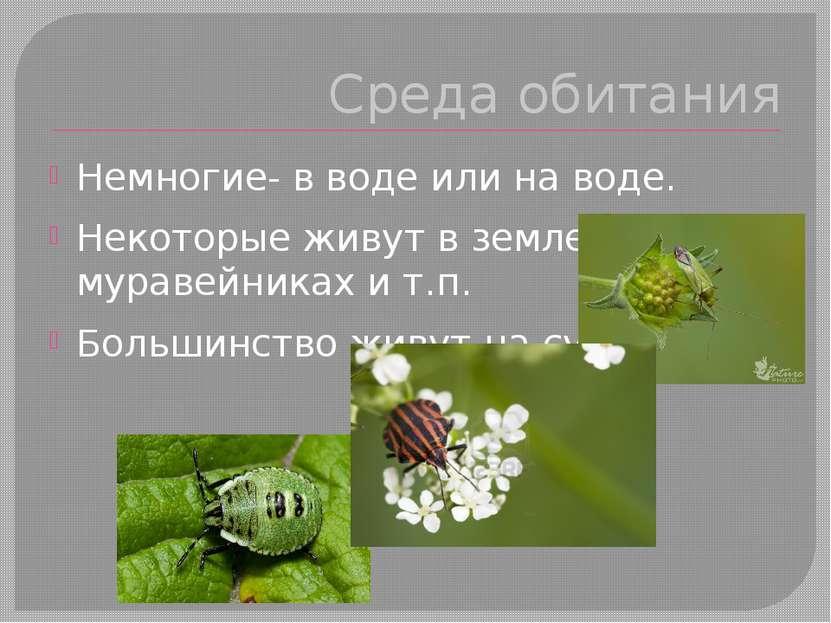 Среда обитания Немногие- в воде или на воде. Некоторые живут в земле, в мурав...