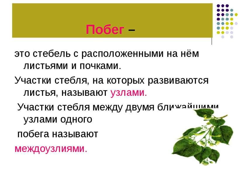 Побег – это стебель с расположенными на нём листьями и почками. Участки стебл...