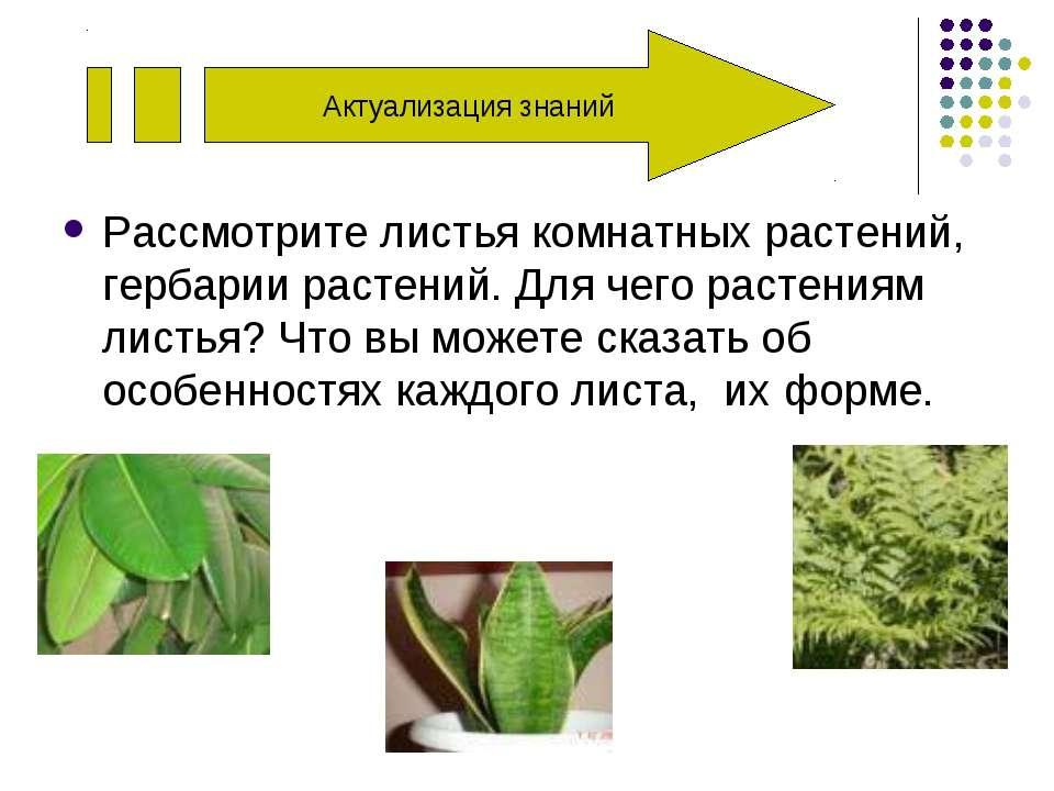 Рассмотрите листья комнатных растений, гербарии растений. Для чего растениям ...