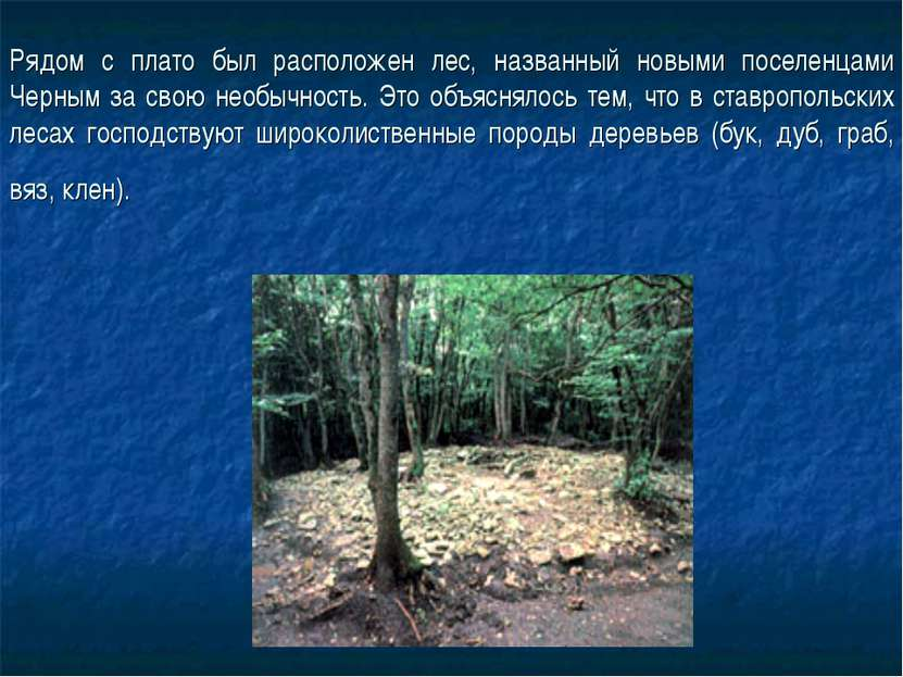 Рядом с плато был расположен лес, названный новыми поселенцами Черным за свою...