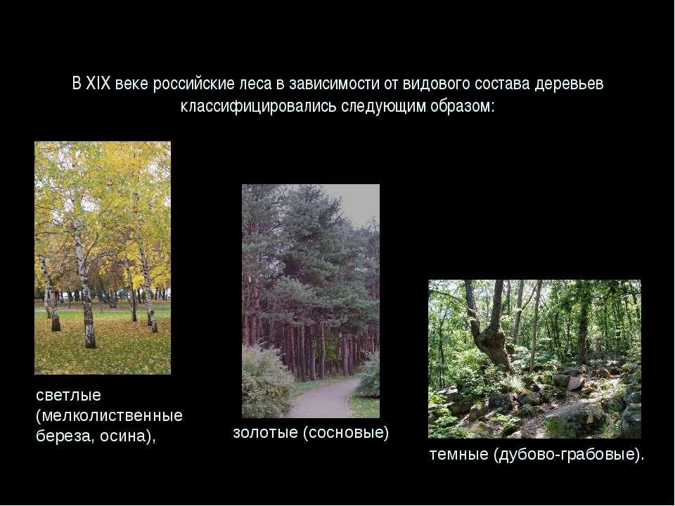 В XIX веке российские леса в зависимости от видового состава деревьев классиф...
