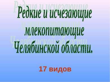 17 видов