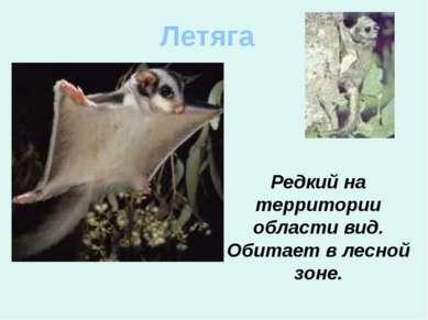 Летяга Редкий на территории области вид. Обитает в лесной зоне.