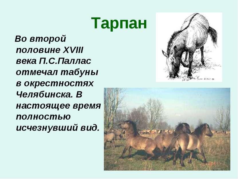 Тарпан Во второй половине XVIII века П.С.Паллас отмечал табуны в окрестностях...