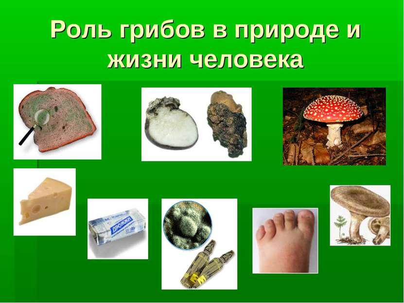 Роль грибов в природе и жизни человека