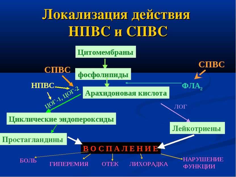 Локализация действия НПВС и СПВС Цитомембраны фосфолипиды СПВС ФЛА2 Лейкотрие...