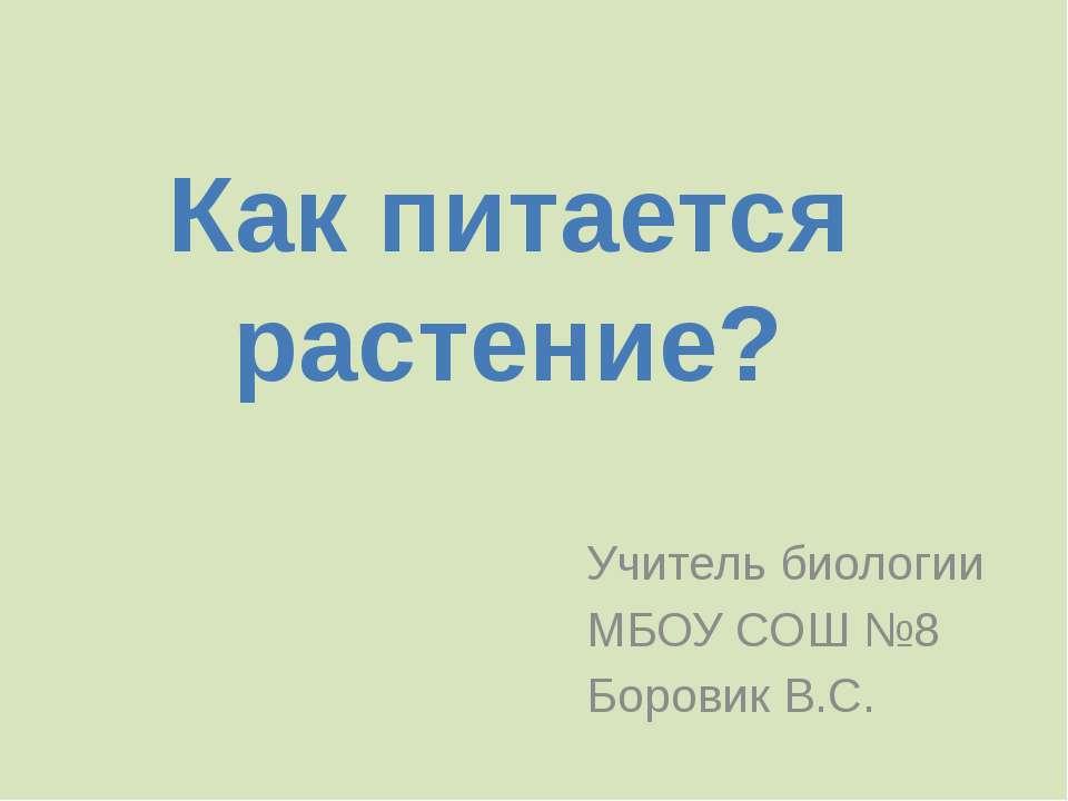 Учитель биологии МБОУ СОШ №8 Боровик В.С. Как питается растение?