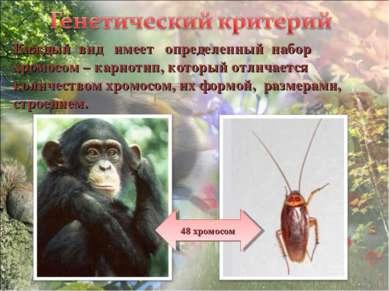 Каждый вид имеет определенный набор хромосом – кариотип, который отличается к...