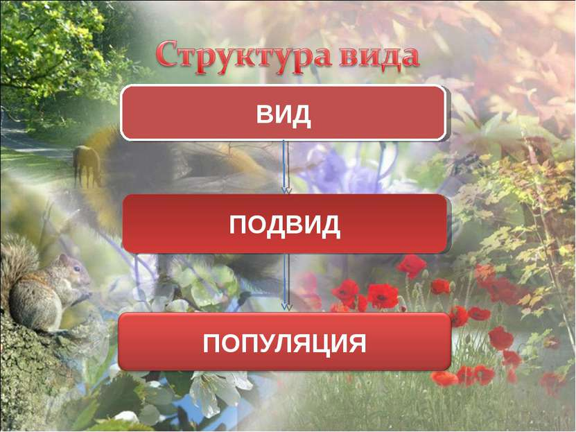 ВИД ПОДВИД