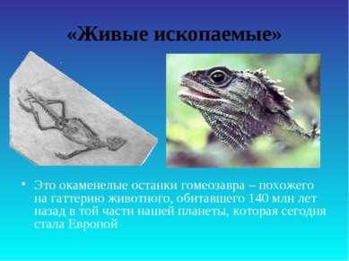 «Живые ископаемые» Это окаменелые останки гомеозавра – похожего на гаттерию ж...