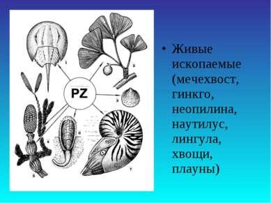 Живые ископаемые (мечехвост, гинкго, неопилина, наутилус, лингула, хвощи, пла...
