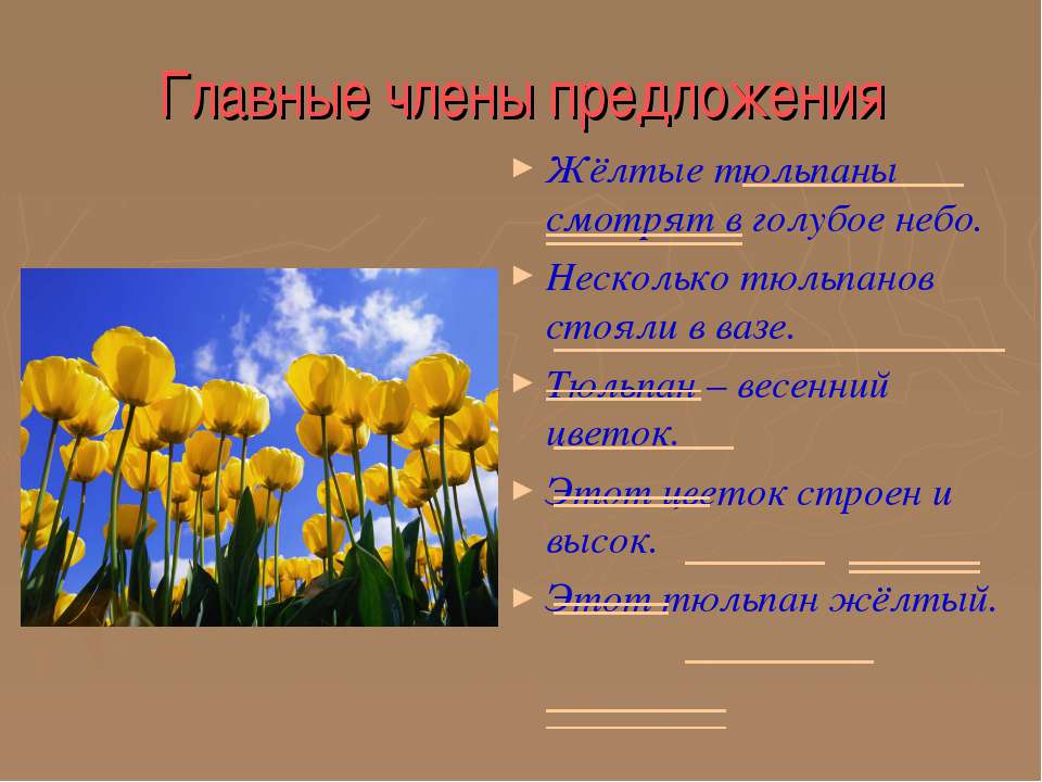 Главные члены предложения Жёлтые тюльпаны смотрят в голубое небо. Несколько т...