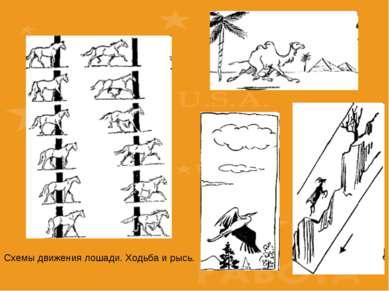 Схемы движения лошади. Ходьба и рысь.