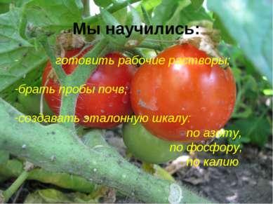 Мы научились: готовить рабочие растворы; брать пробы почв; создавать эталонну...