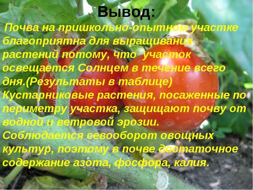 Вывод: Почва на пришкольно-опытном участке благоприятна для выращивания расте...