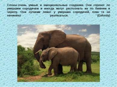 Слоныочень умные и эмоциональные создания. Они горюют по умершим сородичам и...