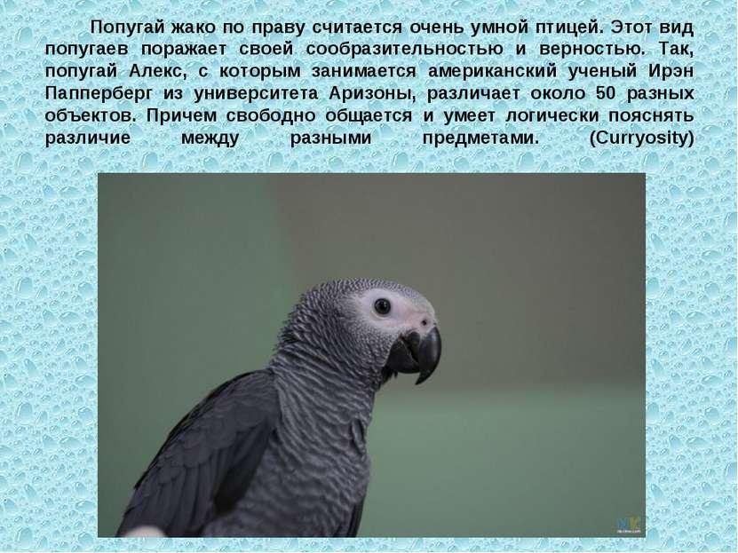 Попугай жако по праву считается очень умной птицей. Этот вид попугаев поражае...