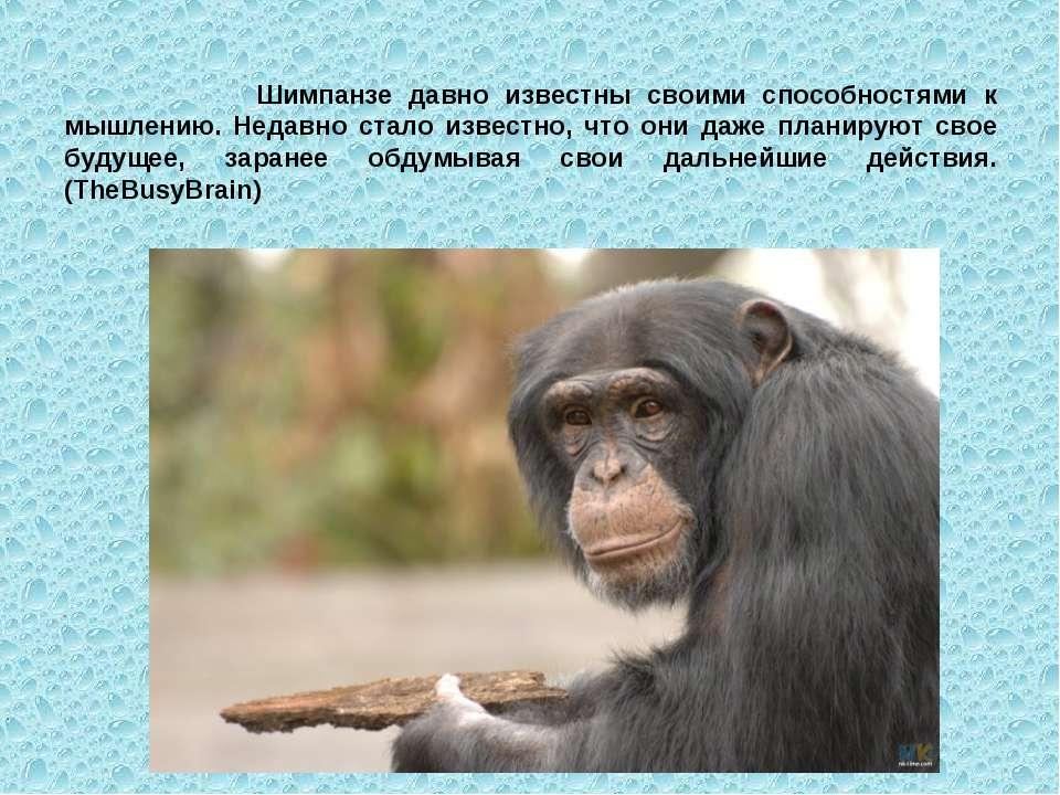 Шимпанзе давно известны своими способностями к мышлению. Недавно стало извест...