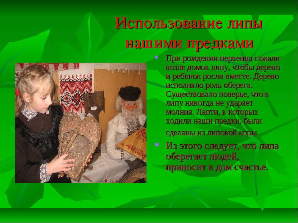 Использование липы нашими предками При рождении первенца сажали возле домов л...