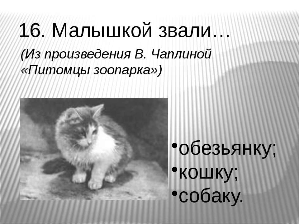 16. Малышкой звали… обезьянку; кошку; собаку. (Из произведения В. Чаплиной «П...