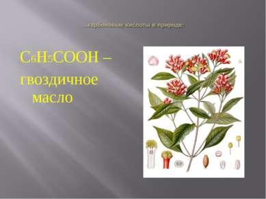 С6Н5СООН – гвоздичное масло