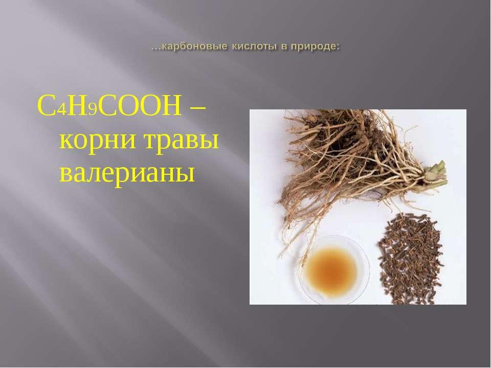 С4Н9СООН – корни травы валерианы