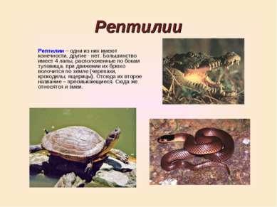 Рептилии Рептилии – одни из них имеют конечности, другие - нет. Большинство и...