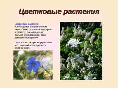 Цветковые растения Цветковые растения преобладают в растительном мире. Очень ...