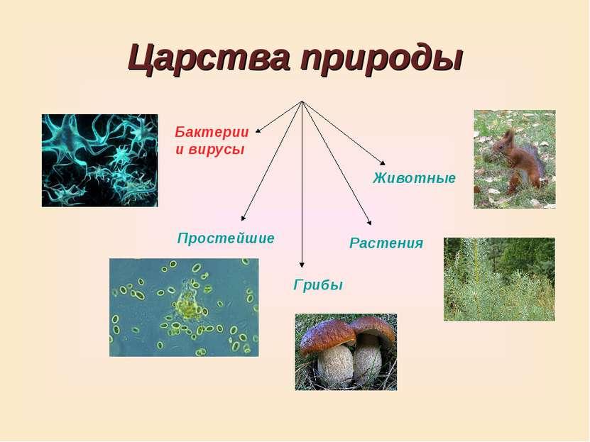 Царства природы Грибы Бактерии и вирусы Животные Простейшие Растения