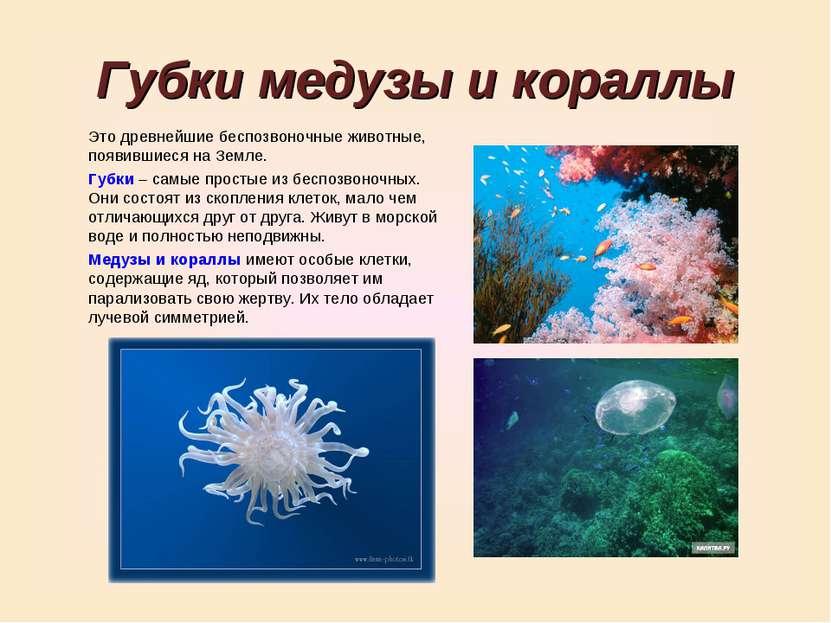 Губки медузы и кораллы Это древнейшие беспозвоночные животные, появившиеся на...