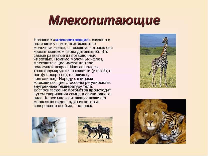 Млекопитающие Название «млекопитающие» связано с наличием у самок этих животн...
