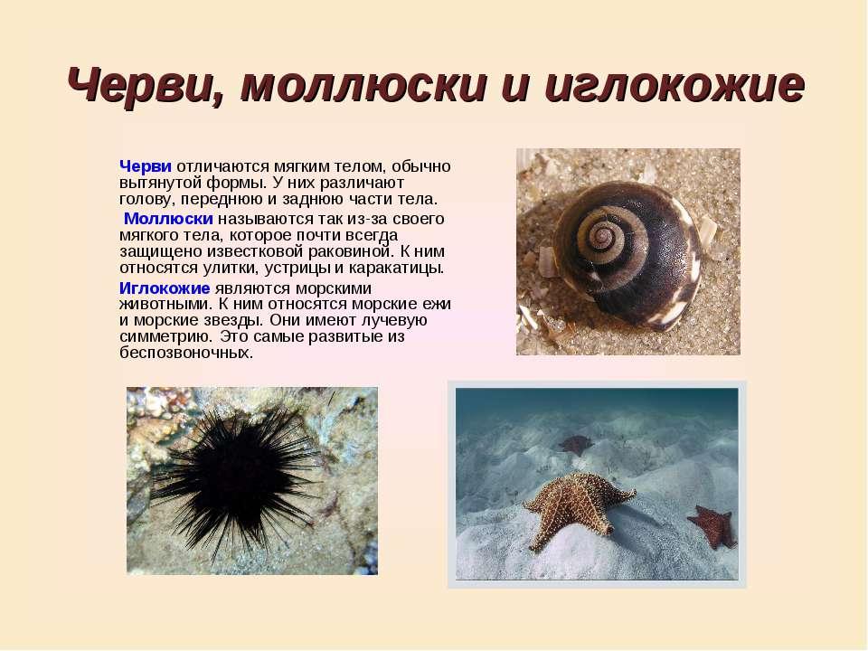 Черви, моллюски и иглокожие Черви отличаются мягким телом, обычно вытянутой ф...
