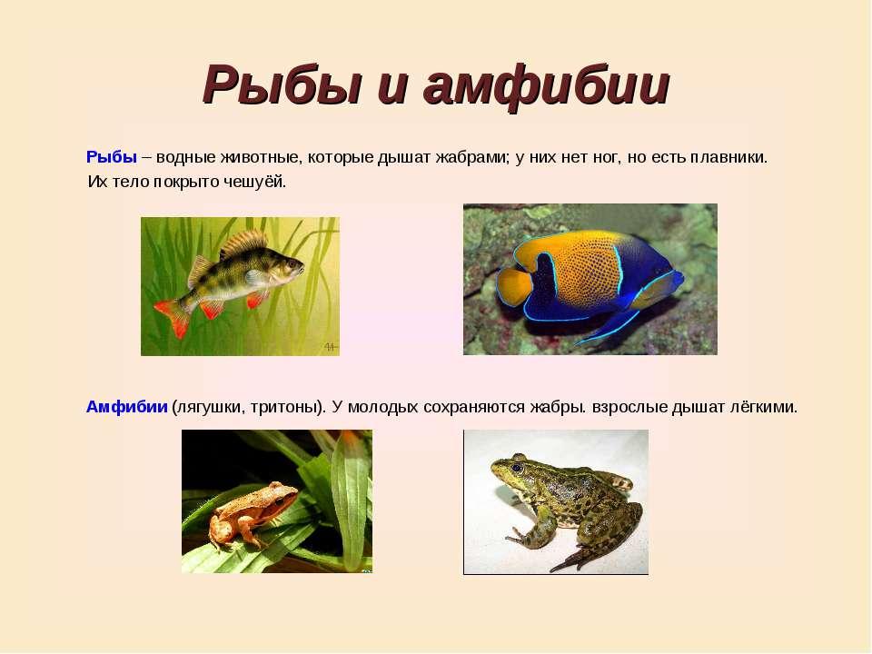 Рыбы и амфибии Рыбы – водные животные, которые дышат жабрами; у них нет ног, ...