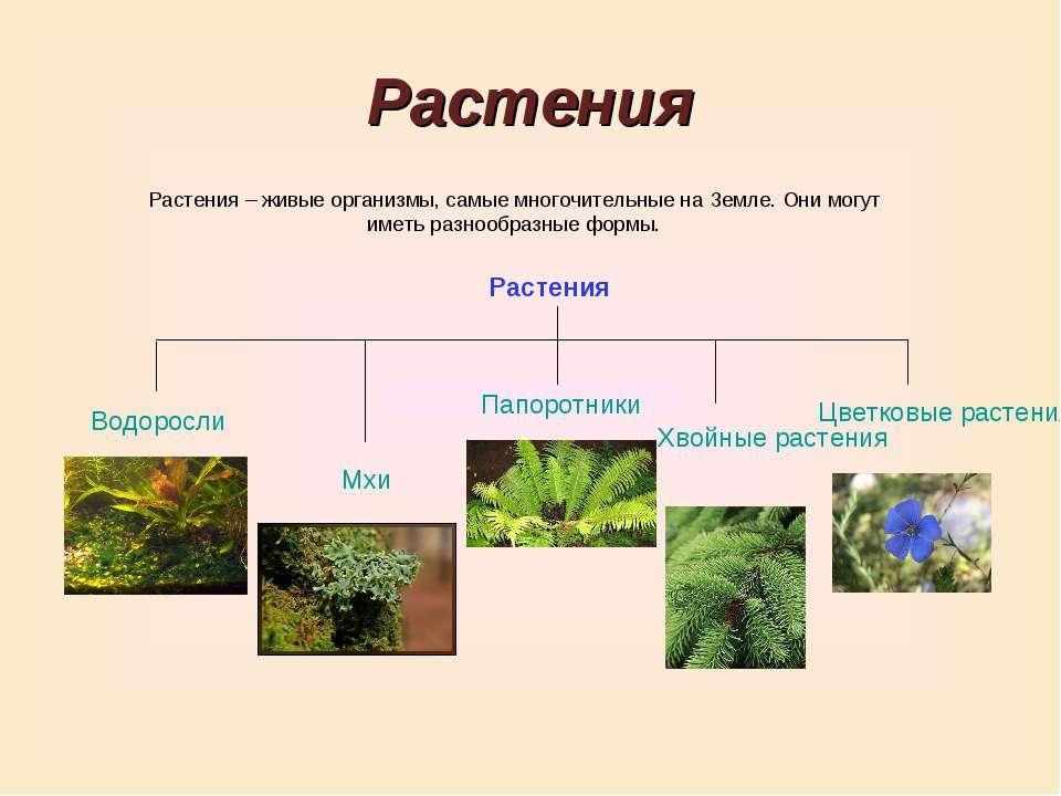 Растения Растения – живые организмы, самые многочительные на Земле. Они могут...