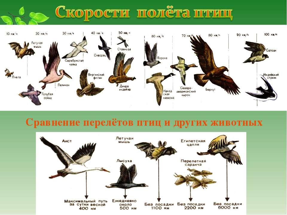 Сравнение перелётов птиц и других животных