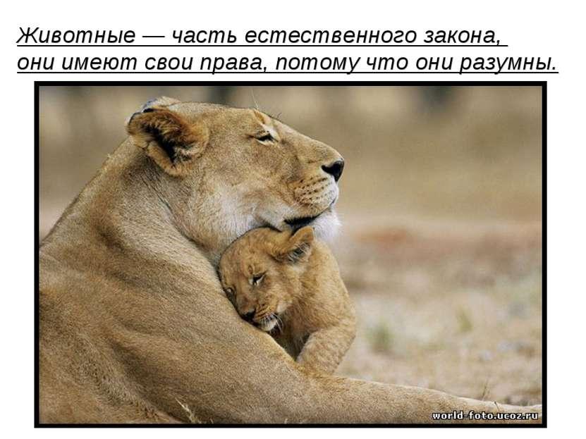 Животные— часть естественного закона, они имеют свои права, потому что они р...