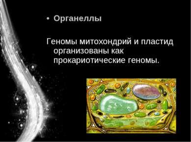 Органеллы Геномы митохондрий и пластид организованы как прокариотические геномы.