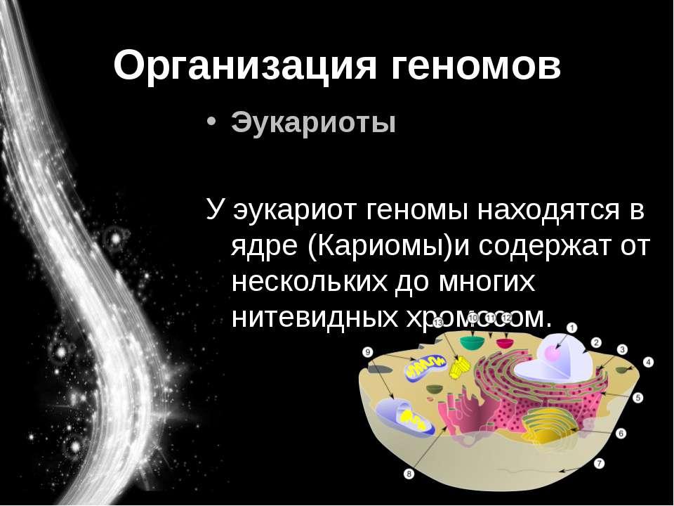Организация геномов Эукариоты У эукариот геномы находятся в ядре (Кариомы)и с...