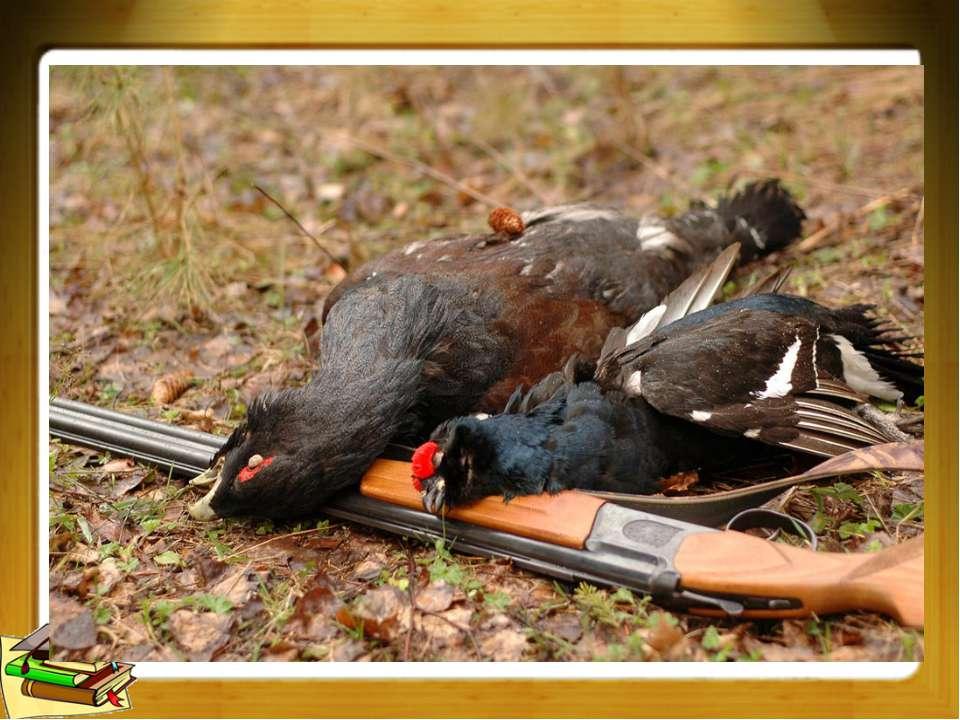 добываемые охотой птицы и звери, мясо которых употребляется в пищу. род птиц ...