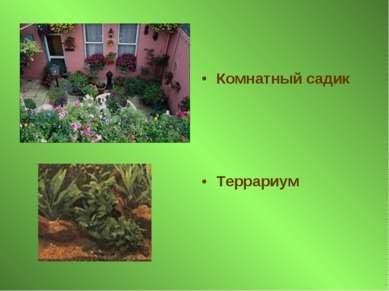 Комнатный садик Террариум