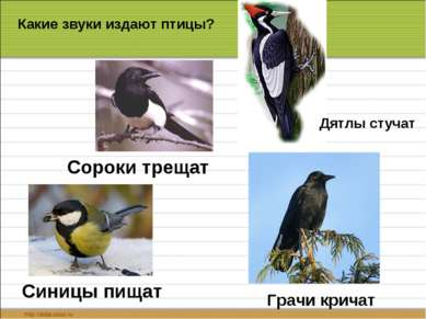 Сороки трещат Синицы пищат Дятлы стучат Грачи кричат Какие звуки издают птицы?