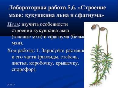 * * Лабораторная работа 5,6. «Строение мхов: кукушкина льна и сфагнума» Цель:...
