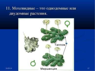 * * 11. Моховидные – это однодомные или двудомные растения.