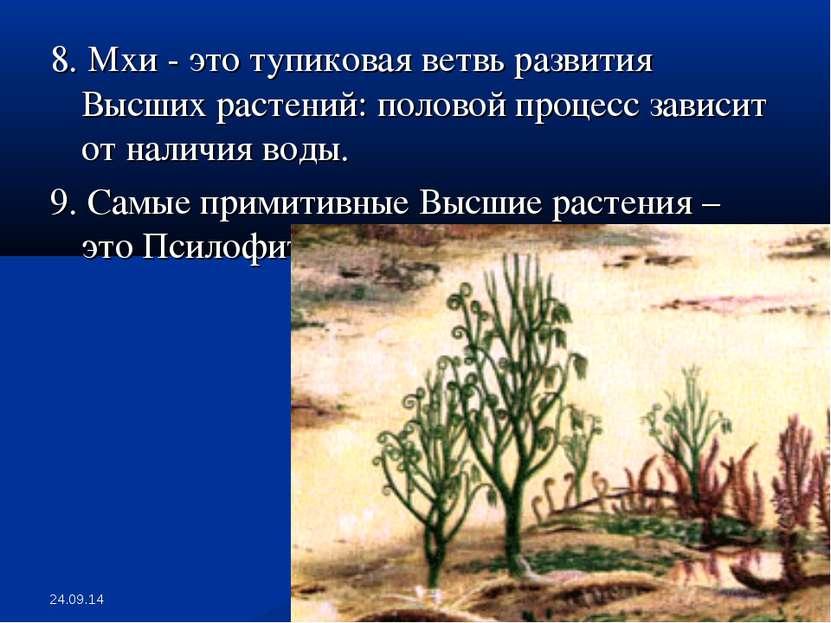 * * 8. Мхи - это тупиковая ветвь развития Высших растений: половой процесс за...